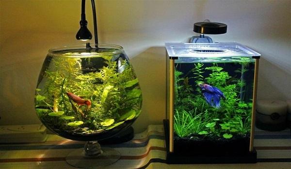 Bể cá mini phụ kiện phong thủy để bàn tạo cảm hứng làm việc