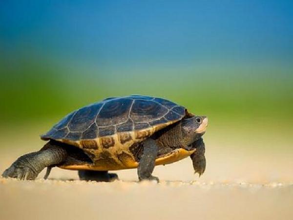 Mơ thấy rùa biển có ý nghĩa gì?