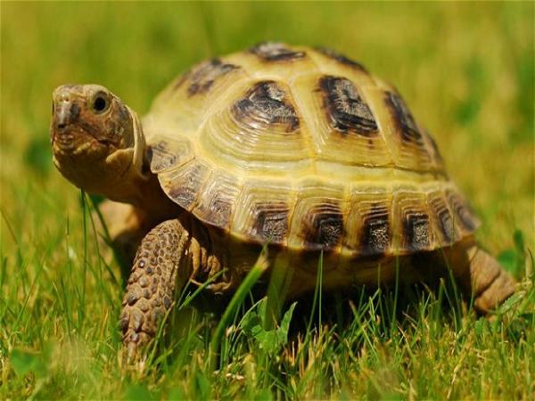 Mơ thấy rùa dự báo trước điềm lành